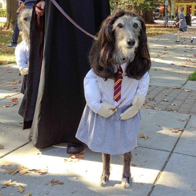 Untitled Dog Halloween Costumes Dog Halloween Funny Animals