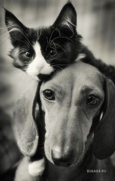 Кошки и собаки: эти животные заряжают позитивом на весь ...