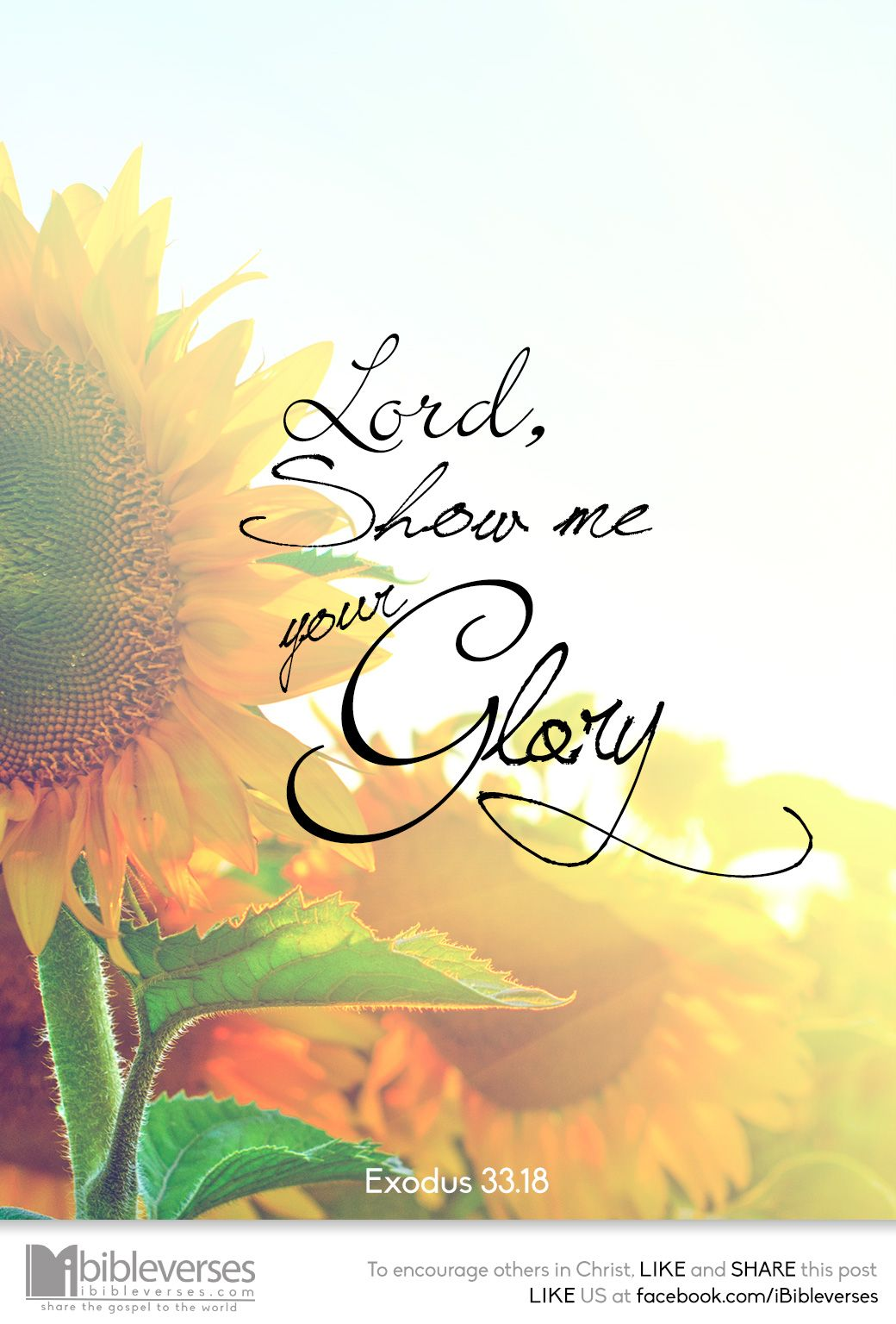 show-me-your-glory_ip.jpg 1,040×1,536픽셀