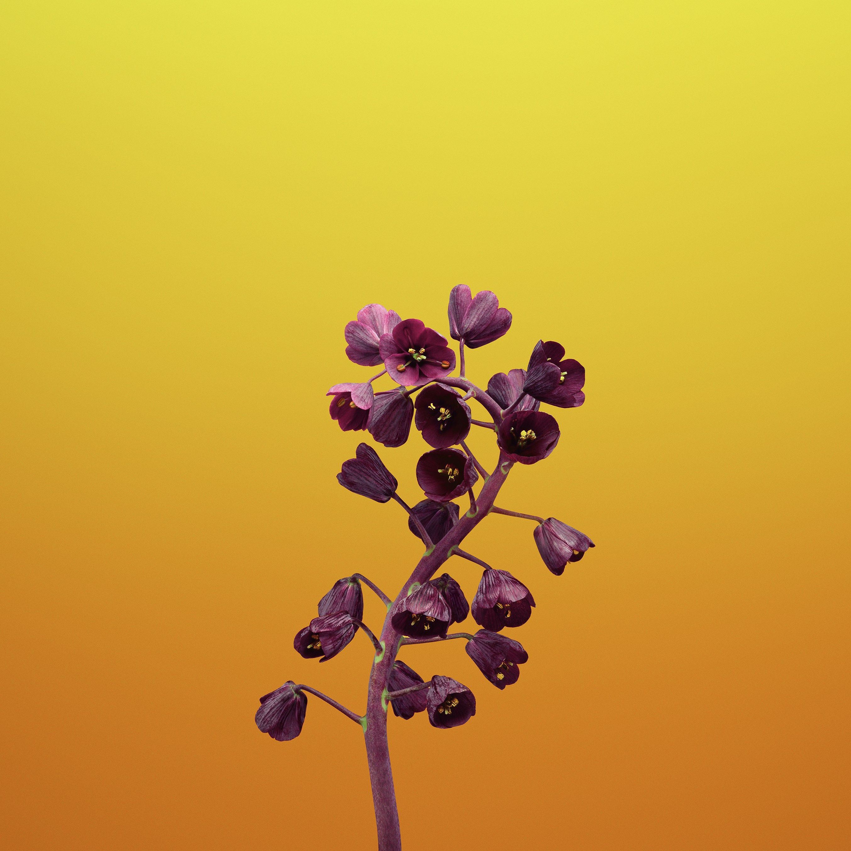 These 20 Gorgeous Ios 11 Wallpapers Will Pretty Up Your Phone Apple Wallpaper Ios 11 Wallpaper Flower Illustration