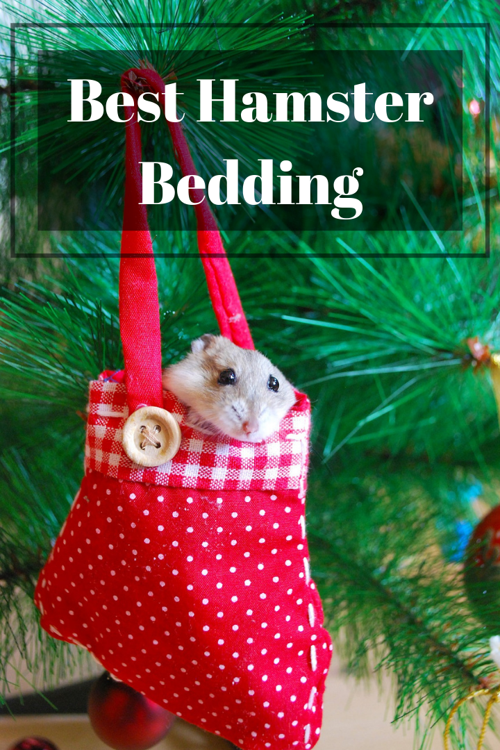 4 Best Hamster Bedding/Substrate Options (An Owner's