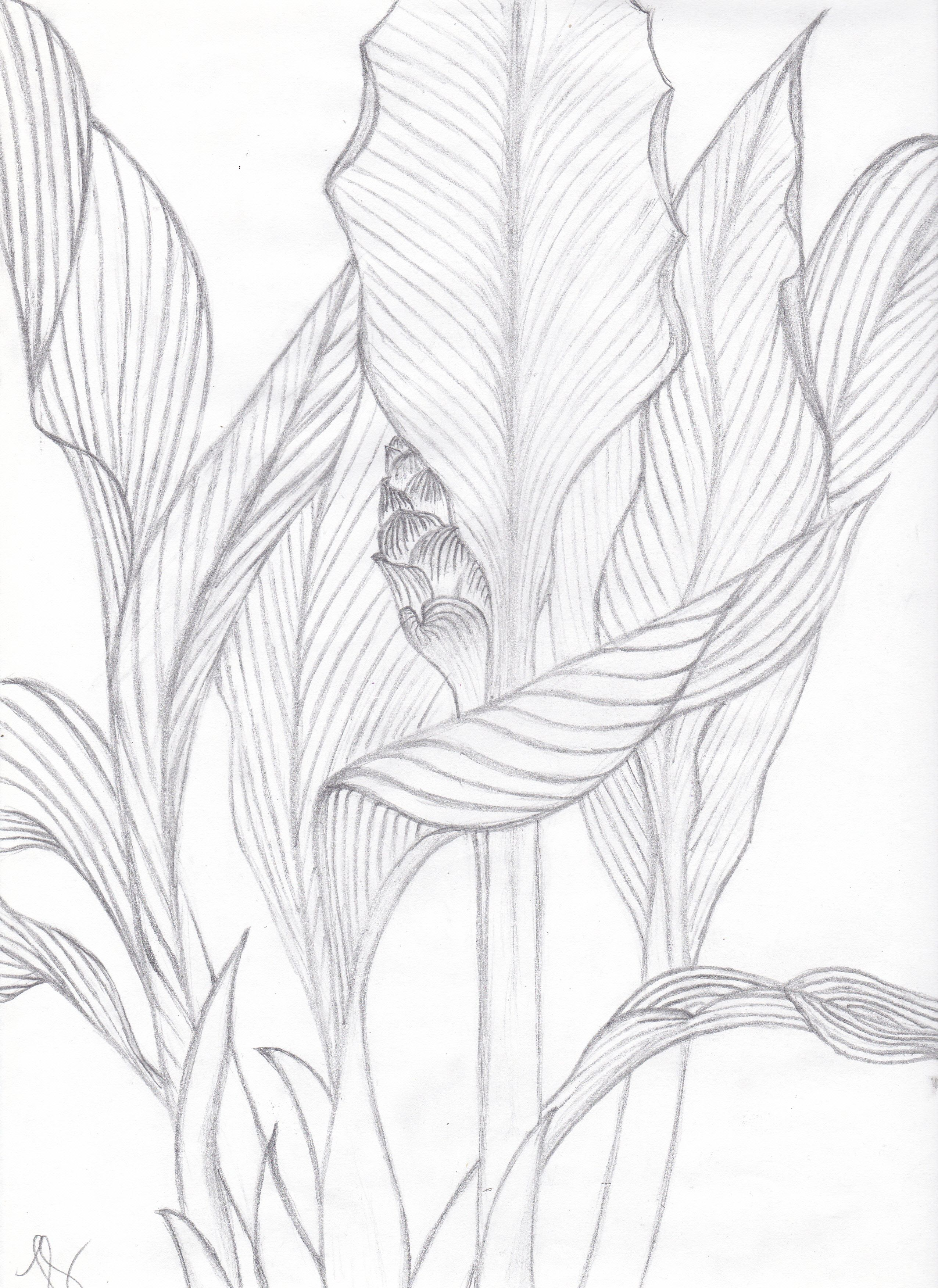 Visualization Basics Tropical Leaves Contour Drawing From