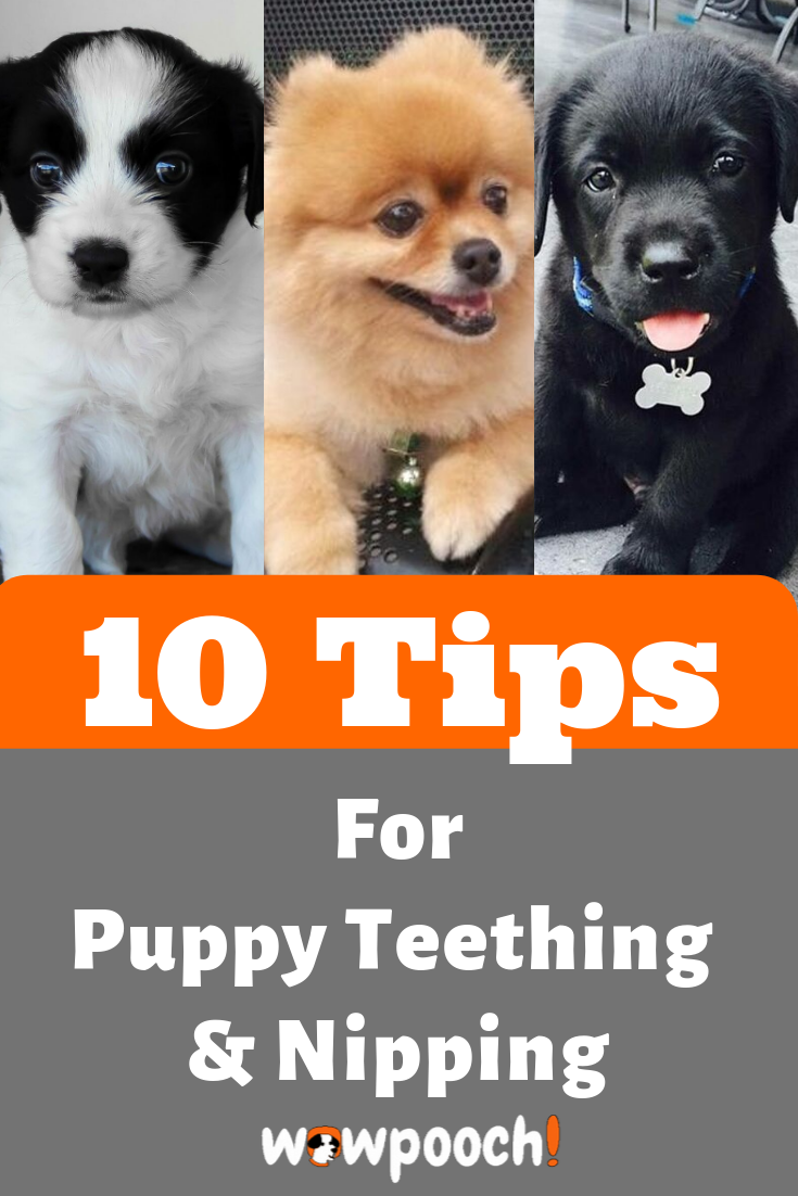 How To Deal With Your Puppy Teething And Nipping In 2020 Puppy