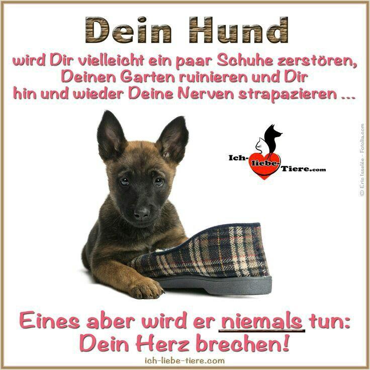 Pin von Inga Schamberg auf Mensch und Tiere   Hunde ...