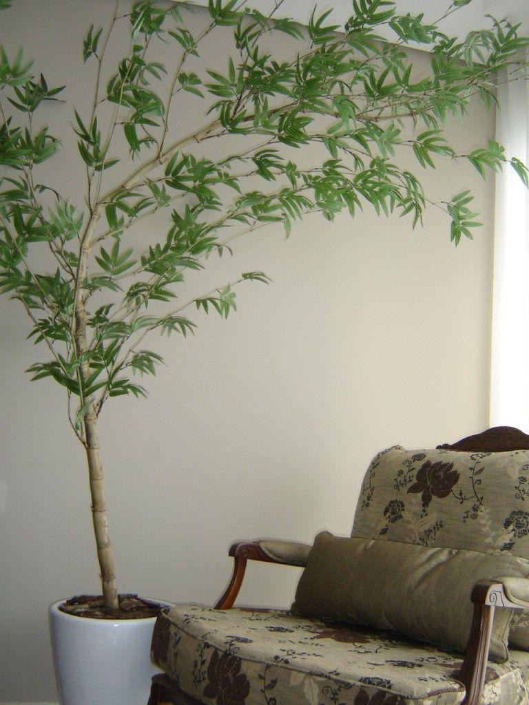 Bambu mosso vaso spa pinterest bambu vaso e jardinagem - Bambu in vaso acqua ...