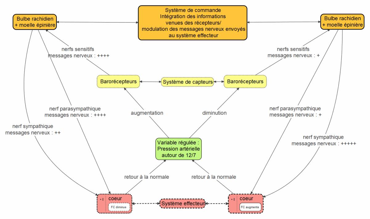 Utiliser Les Cartes Mentales En Svt Sciences De La Vie Et De La Terre Carte Mentale Science Et Vie Sciences Physiques