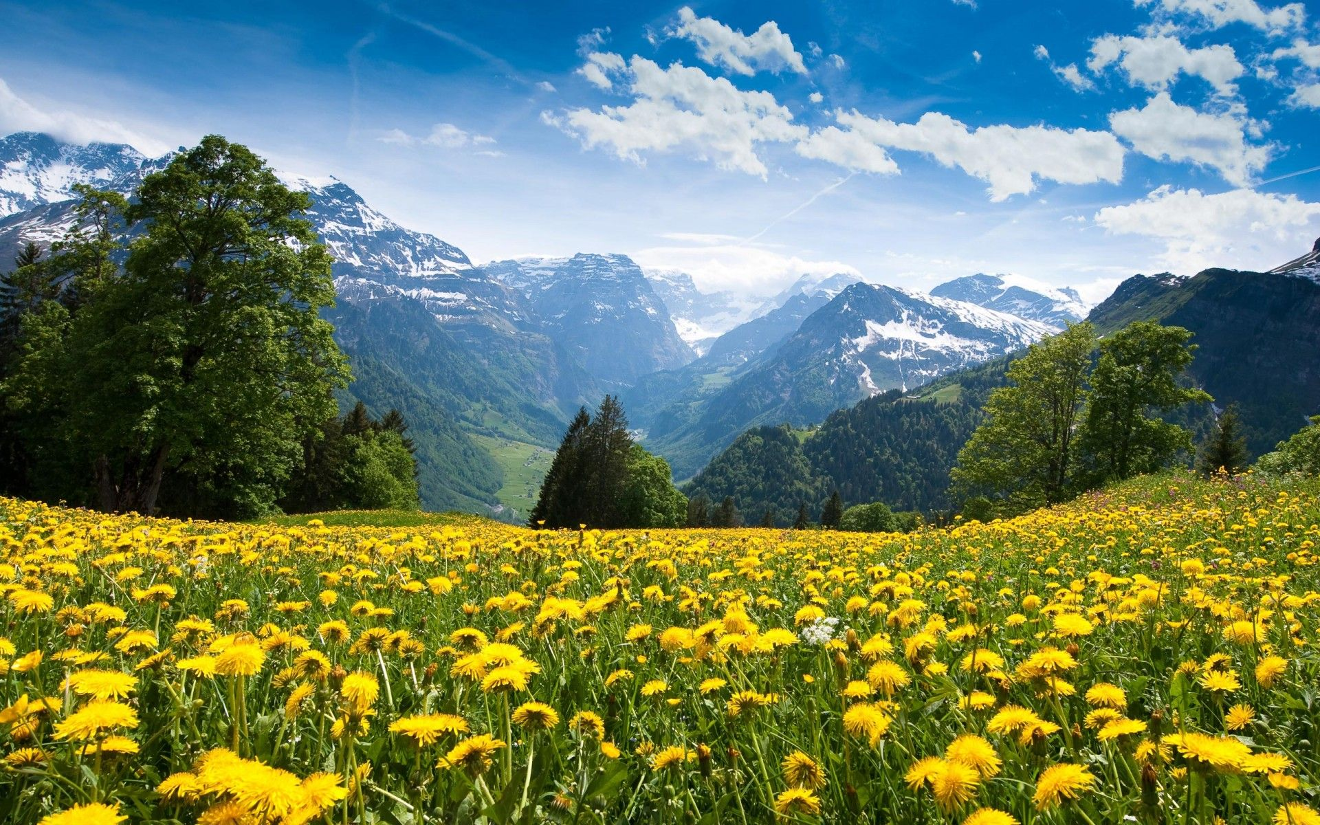 Alps Mountain By Flower Meadows Scenery Wallpaper Mountain Landscape Natural Scenery