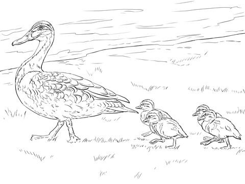 Duck And Ducklings Walking Coloring Page From Ducks Category Select From 20946 Printable Crafts Of Ca Duck And Ducklings Coloring Pages Chicken Coloring Pages