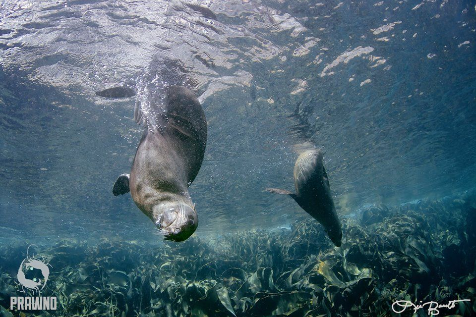 Who doesn't need to twirl every now and then? Sea lions in La Paz, Mexico.