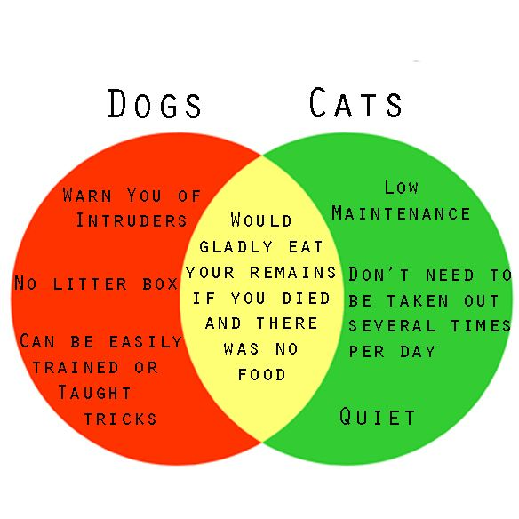 a venn diagram to help you decide if you should get a dog or a cat  dogs or cats venn diagram