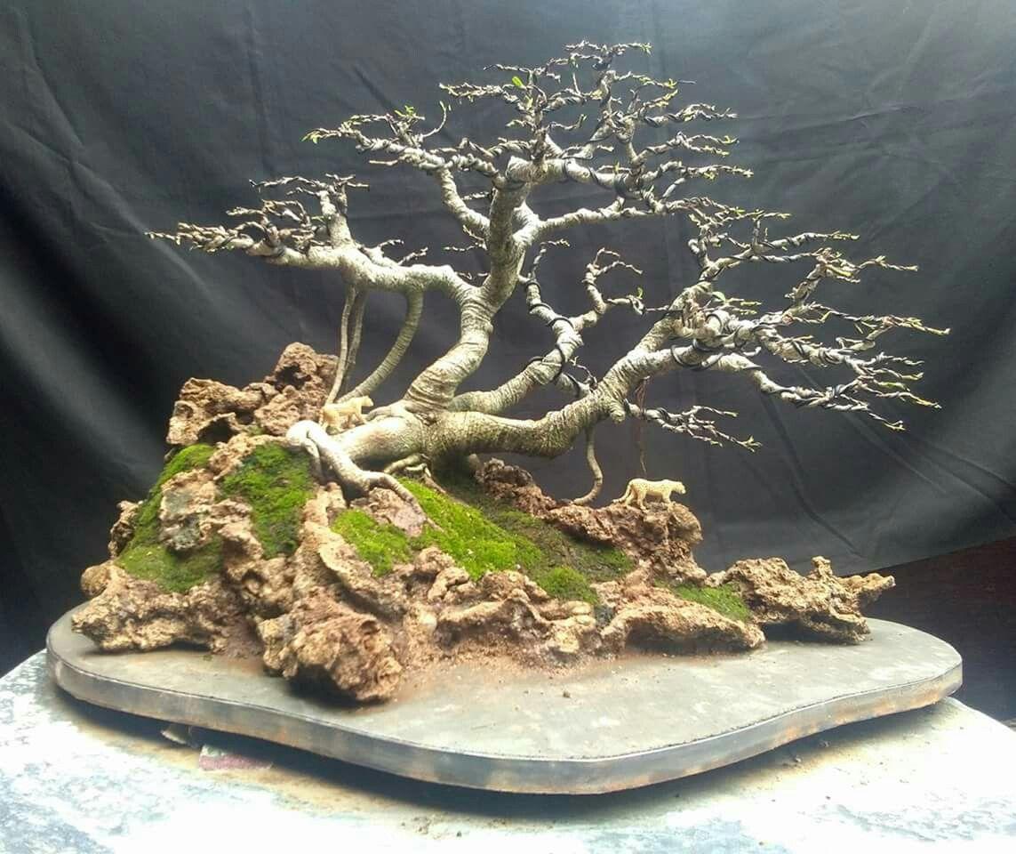 Pin di cinzia calabro 39 su il verde intorno indoor bonsai for Alberelli da giardino fioriti