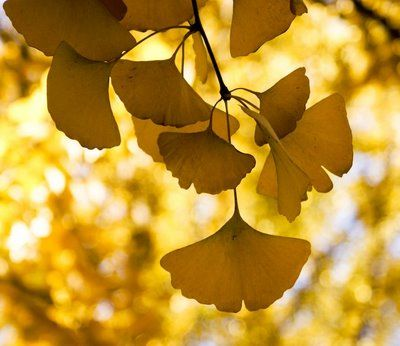 Nature's first green is gold,  Her hardest hue to hold.  Her early leaf's a flower;  But only so an hour.  Then leaf subsides to leaf.  So Eden sank to grief,  so dawn goes down to day.  Nothing gold can stay.   ~Robert Frost