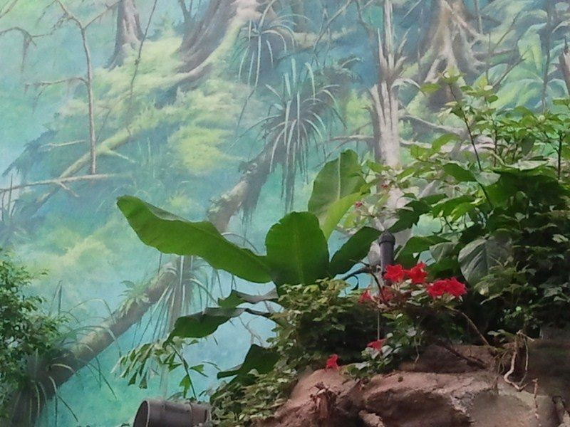 Wandmalerei im Darwineum (c) Frank Koebsch 1  - Das Darwineum ist ein absolutes Highlight im Rostocker Zoo, mehr Informationen unter http://frankkoebsch.wordpress.com/2012/09/22/die-grosten-wandmalereien-in-rostock/