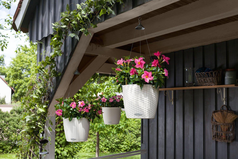 Lechuza Nido Cottage (27 X 23 Cm), Weiss | Tops Und Ferienhäuschen Blutenpracht Auf Dem Balkon Blumen