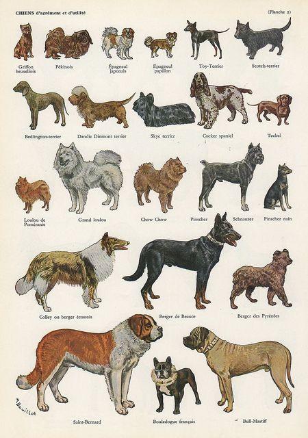 Dog French Plate Dog Illustration Dog Breeds Dog Breeds List