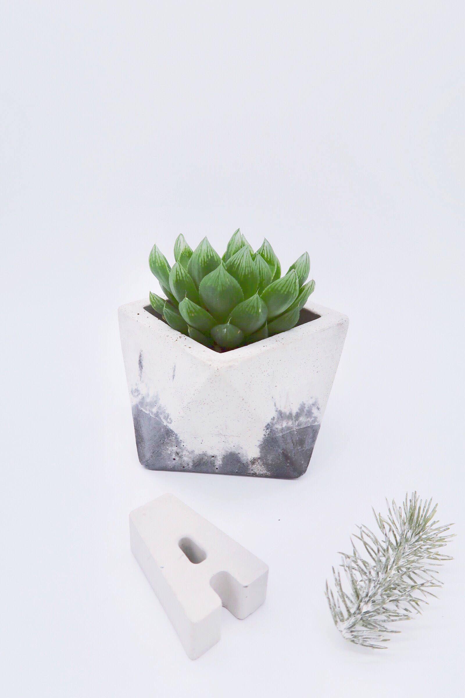 geometrischer blumentopf aus beton | vase für sukkulenz kaktus