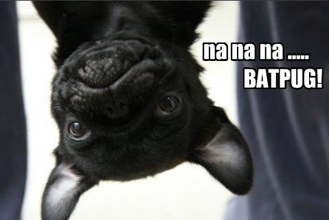 Funny Pug Dog Meme Pun LOL Love pugs? Follow me ...