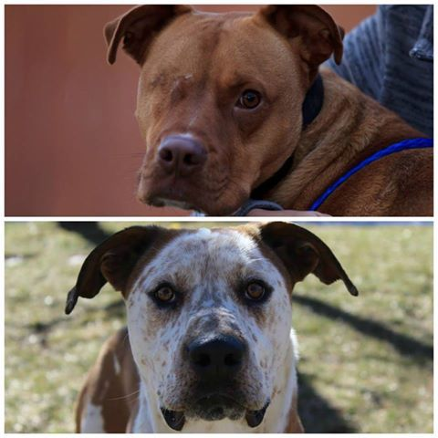 We Ll Be At Petsmart In Colorado Springs 2160 Southgate Road Today From 10 Am To 1 Pm With These Handsome Guys Ace Humane Society Animal Companions Animals