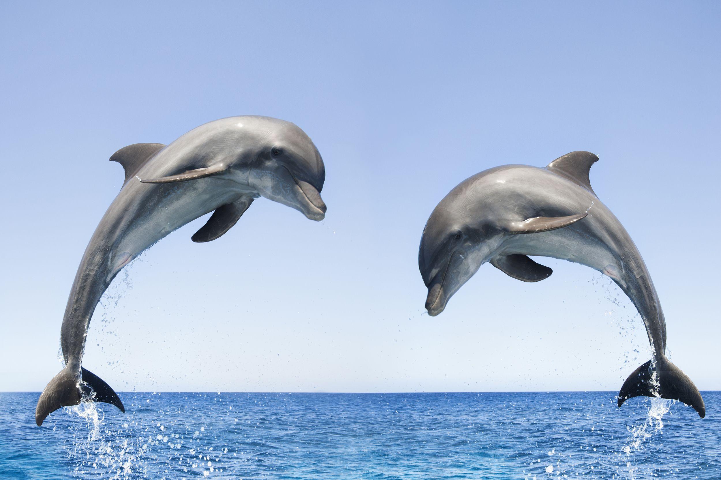 Картинка с дельфинчиками