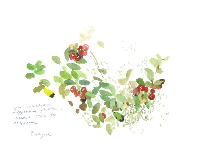 cowberry is getting brighter every day http://olgainoue.com/index.php?/nature-diary/colors/