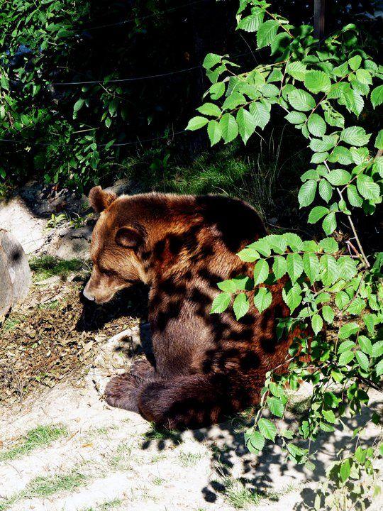 Suiça - Berna - Parque dos Ursos