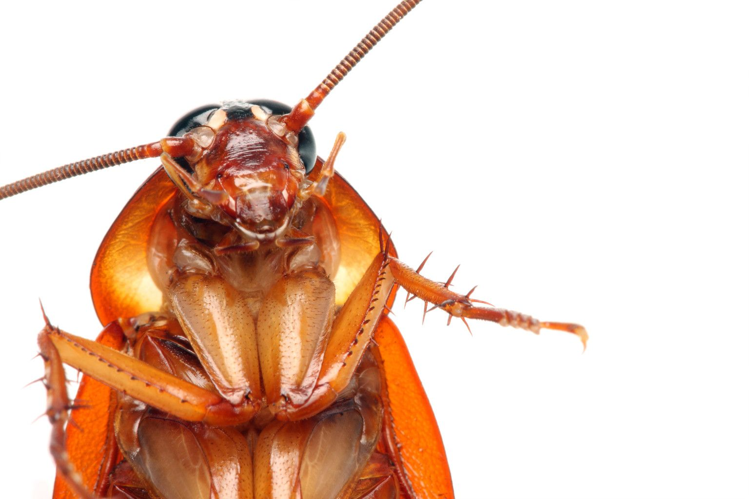 One Million Cockroaches On The Loose Cockroaches Insects Bugs And Insects