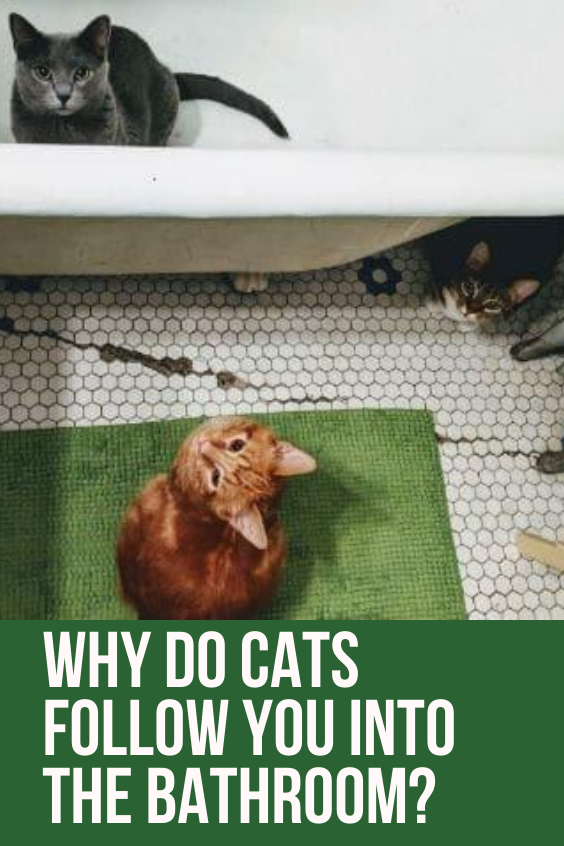 Why Do Cats Follow You Into The Bathroom In 2020 Funny Cute Cats Cat Love Quotes Cats