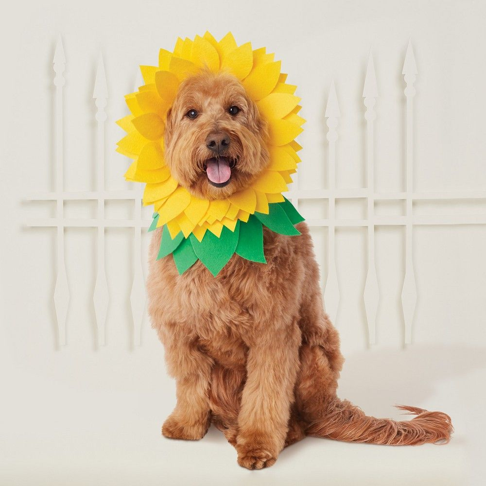 Halloween Sunflower Headwear Costume For Dog Yellow Green Hyde