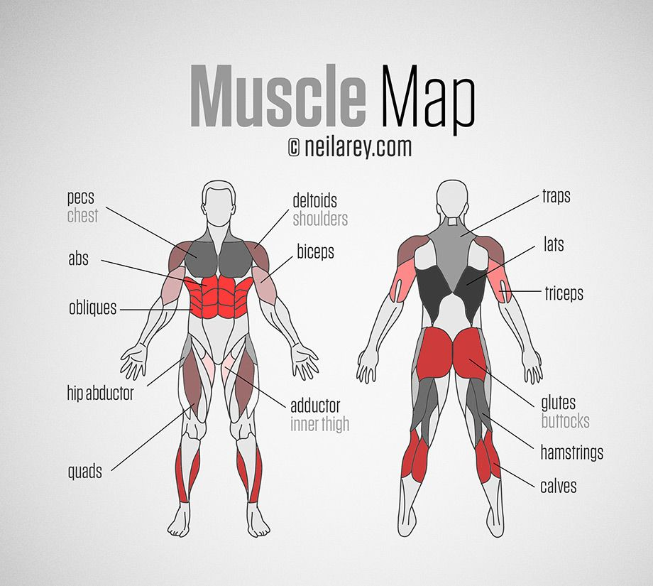 neila rey's muscle map | fitness & workouts | pinterest | muscles, Muscles