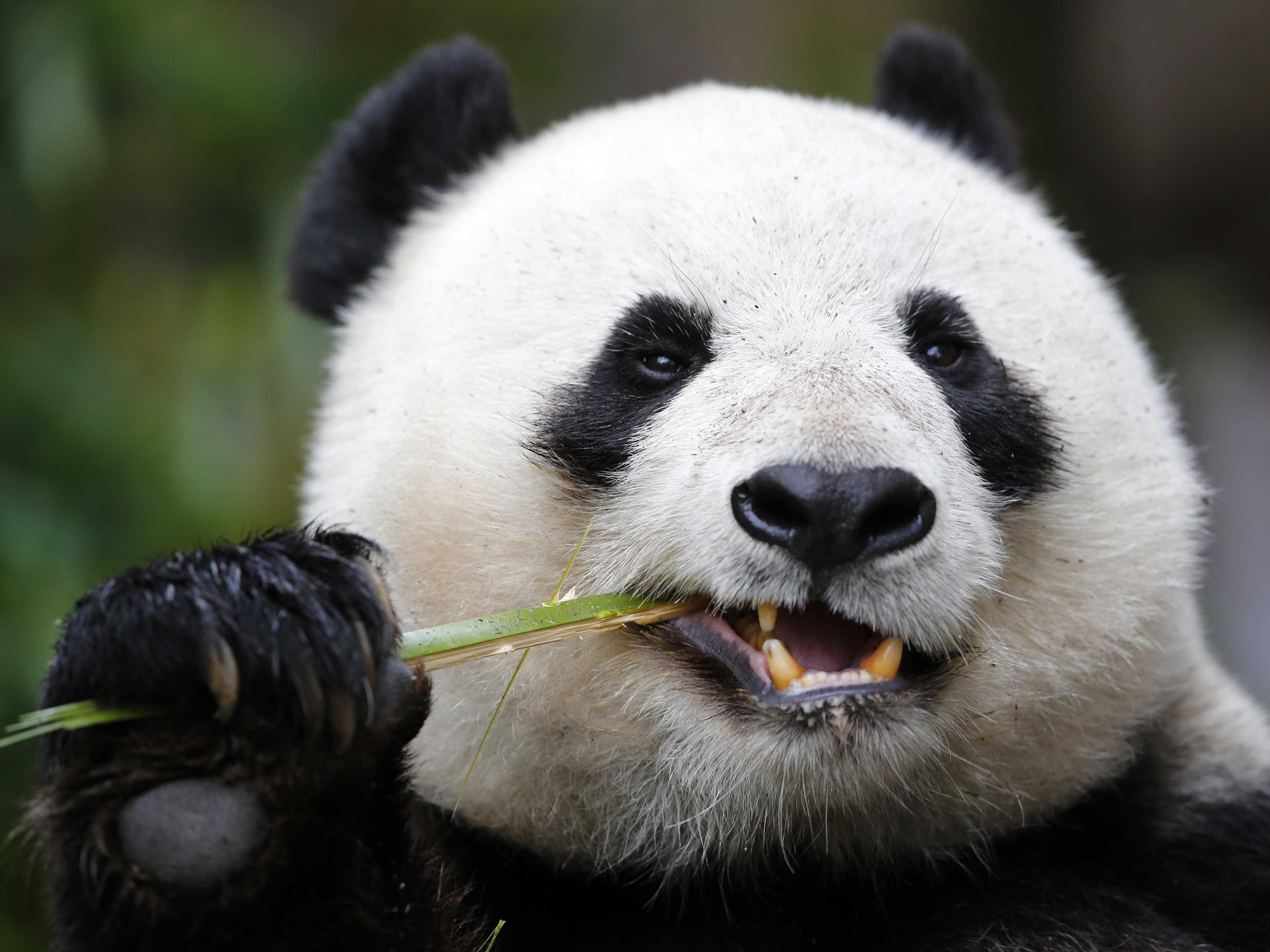 Here's What The China 'Super Bear' Scenario Looks Like