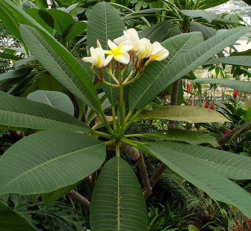 Outdoor Tropical Plants Name - Want to be able to ...