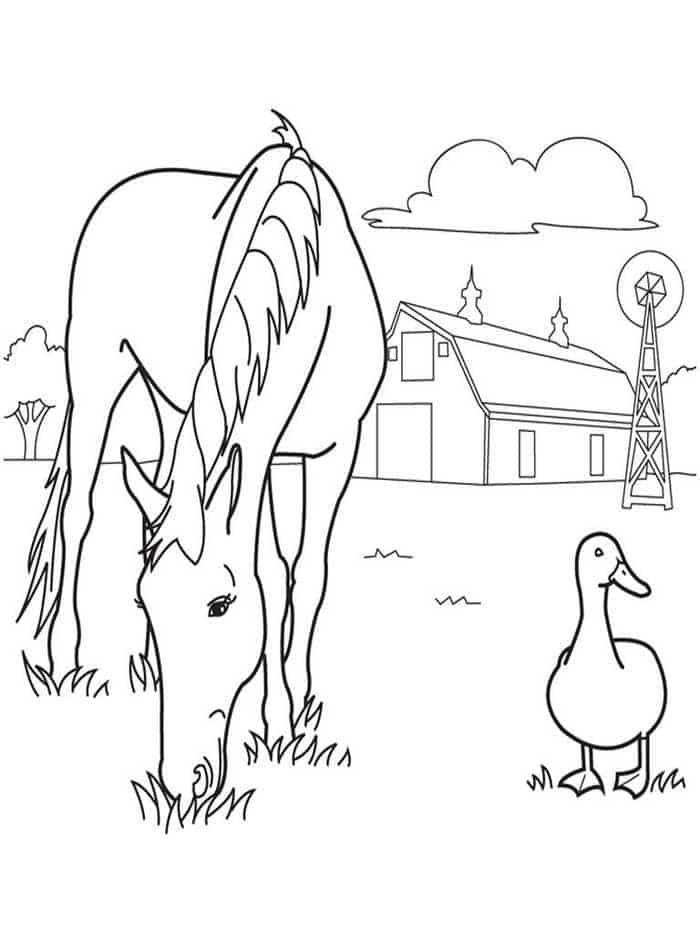 pferde zum ausdrucken mit bildern  bauernhof