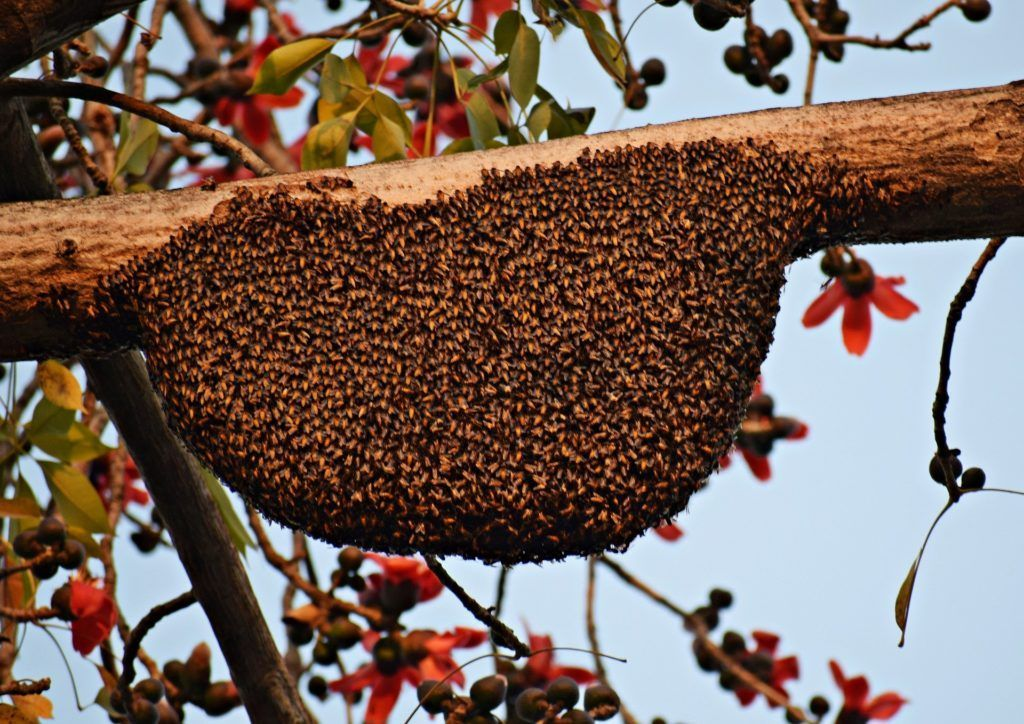 When Is It Too Late To Split A Hive