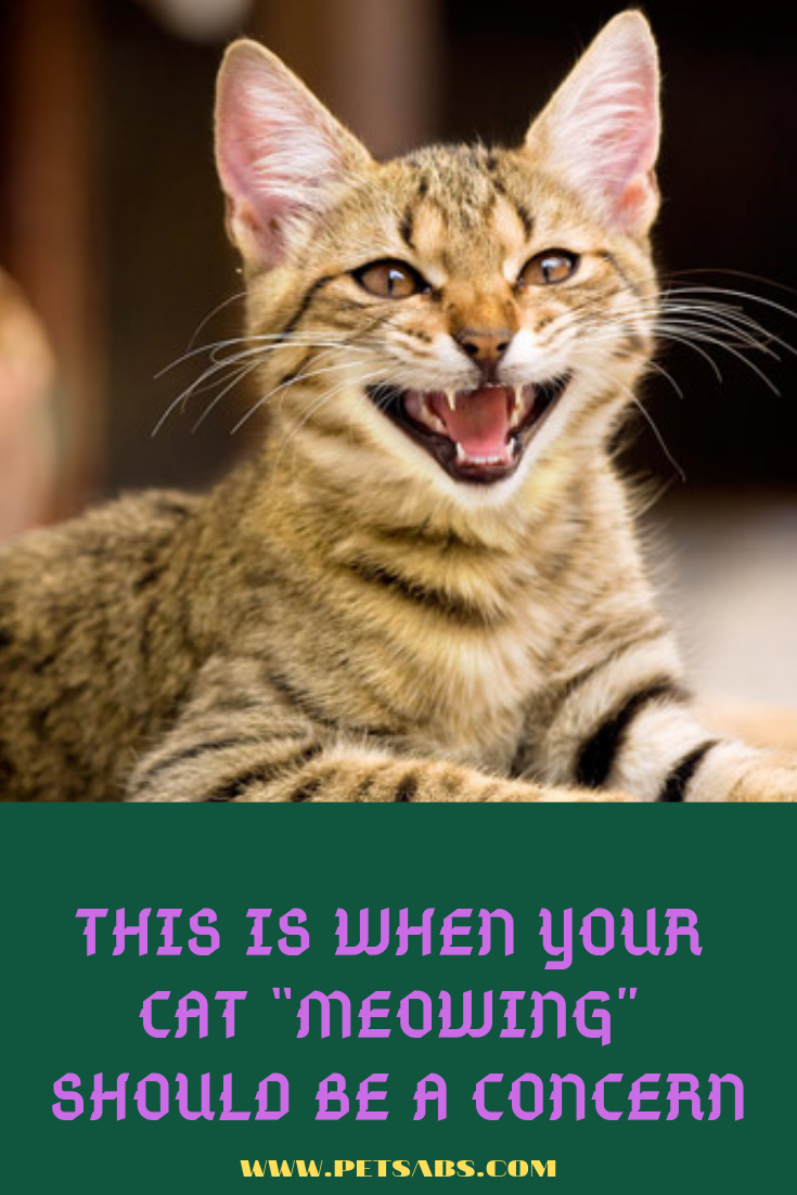 This Is When Your Cat Meowing Should Be A Concern Cats Cats Meow Pet Parent