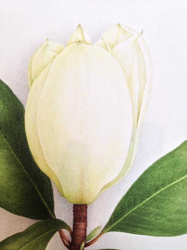 Aquarelles Botaniques Vincent Jeannerot Botanical Flowers Painter