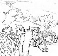 Image Result For Simple Coral Reef Coloring Pages Coral Reef Drawing Coral Drawing Underwater Drawing