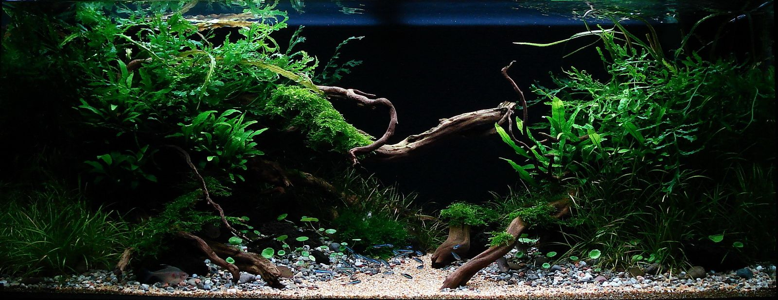 Pin on AquaScaping