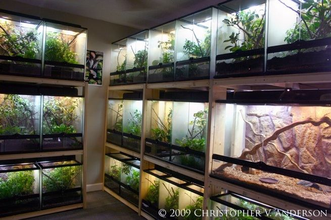 Chris Anderson's Terrarium Room. Chris keeps and breeds his chameleons successfully in our glass terrariums!