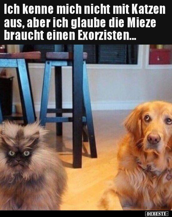 Photo of No sé sobre gatos, pero creo que ellos … | Fotos graciosas, spr …