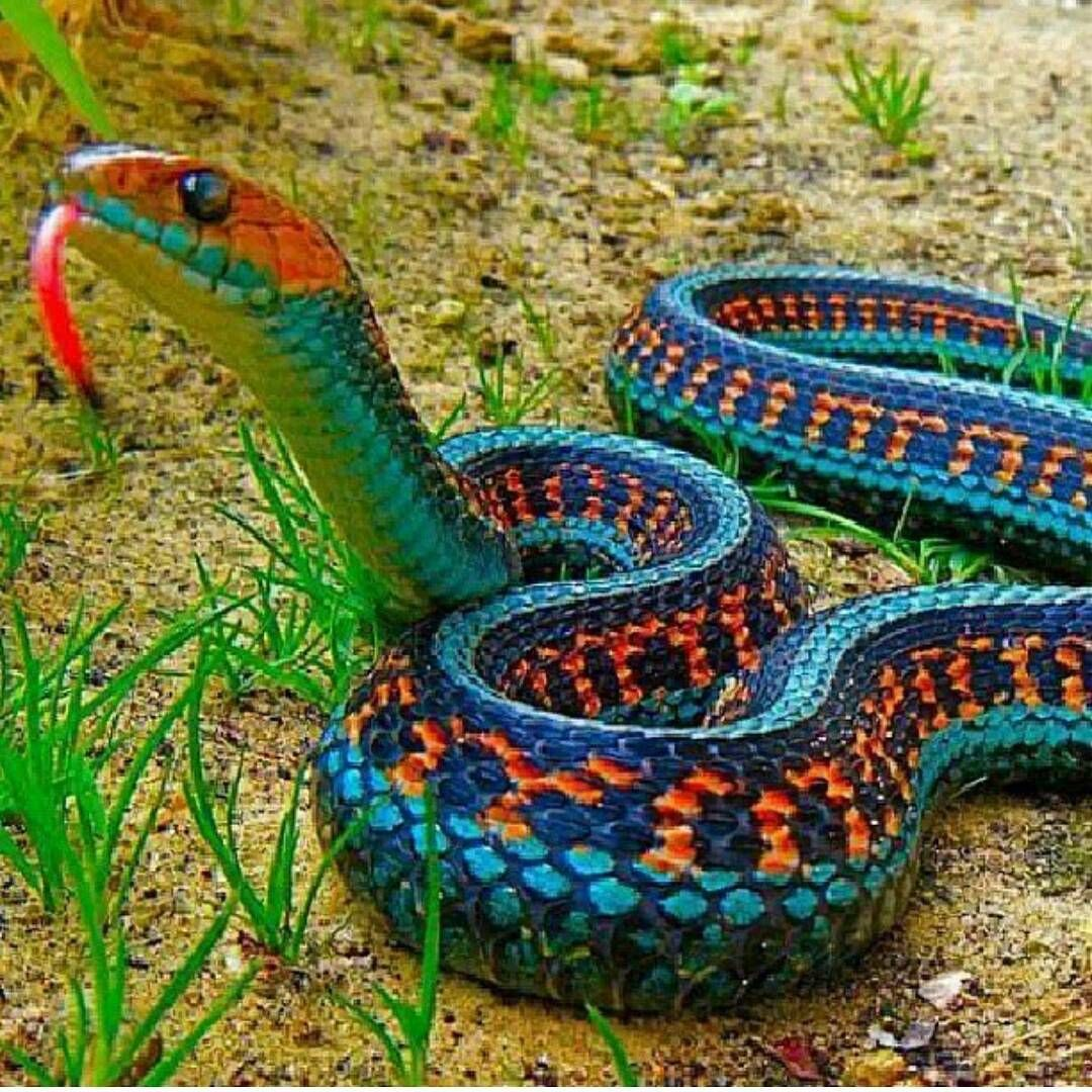 13 Beautiful and Colorful Small Snake Pets Colorful