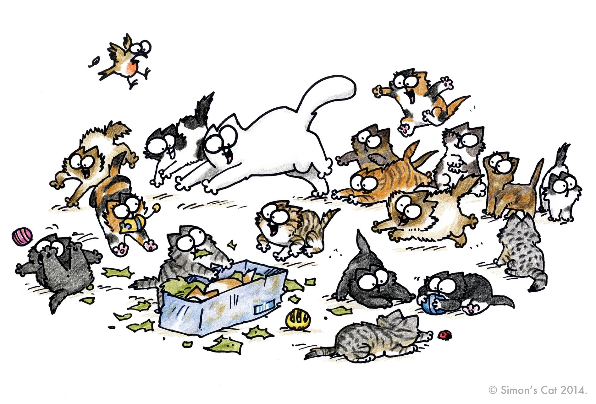 indoor cats suddenly fighting