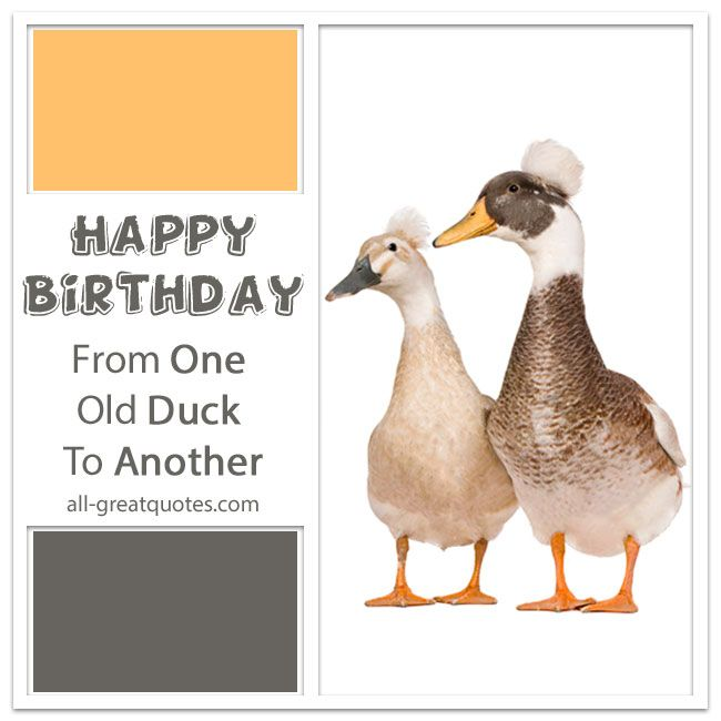 Free funny birthday cards free funny birthday cards and happy happy birthday from one old duck to another free funny birthday cards bookmarktalkfo Images