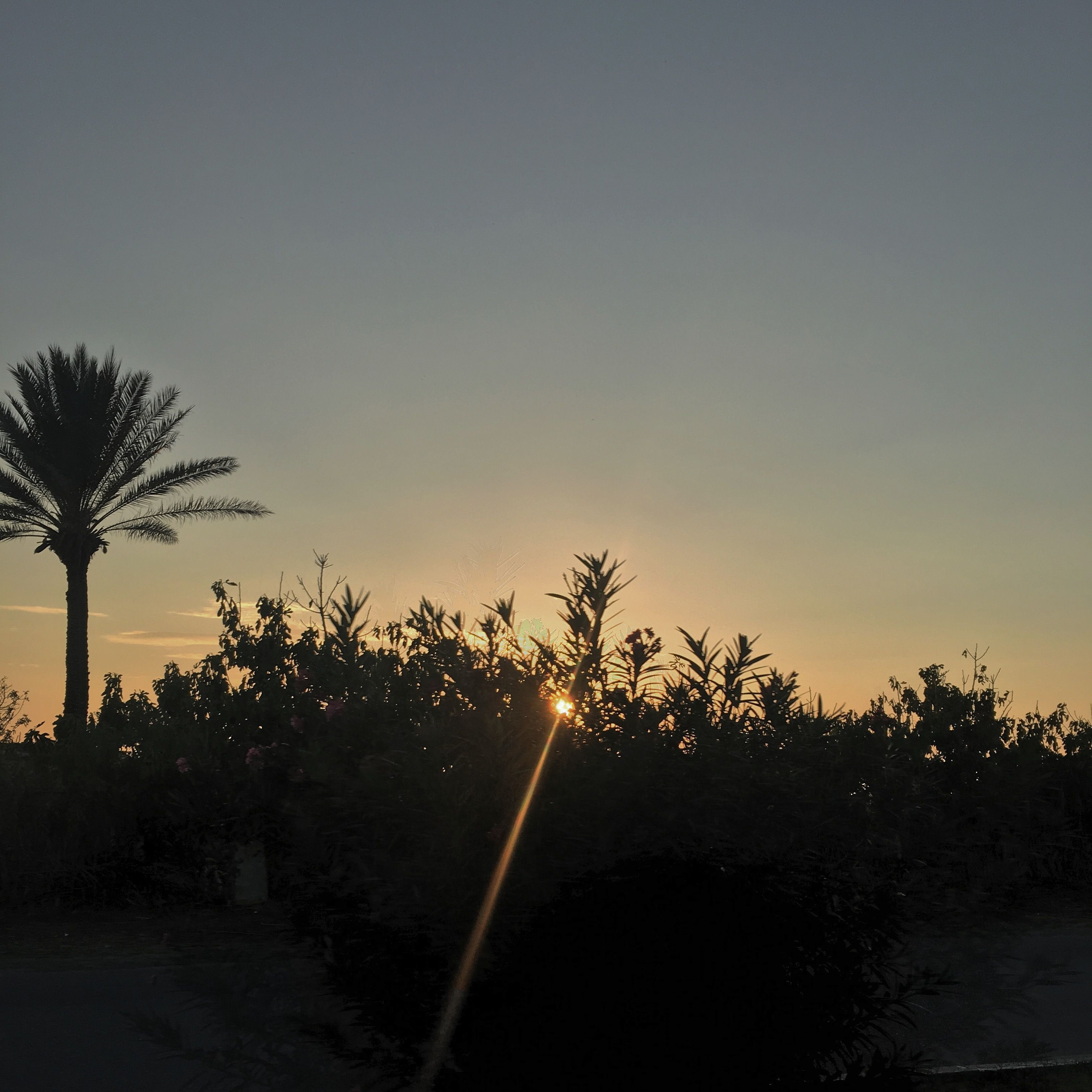 قمر الليله قمر الليله الغروب نعنع أزهار شاطيء البحر صبار صبر ورد زهور أبيض أحمر أصفر زهري اسود ابيض الوان ازهار حزينه أزها Celestial Outdoor Sunset