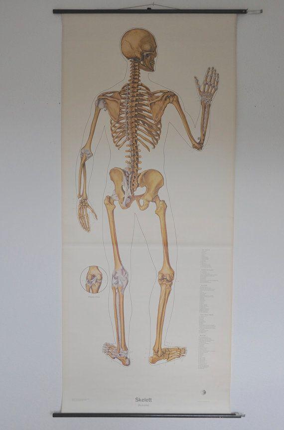 Life Size Original Xl Human Anatomy Poster Germany Pull Down Chart