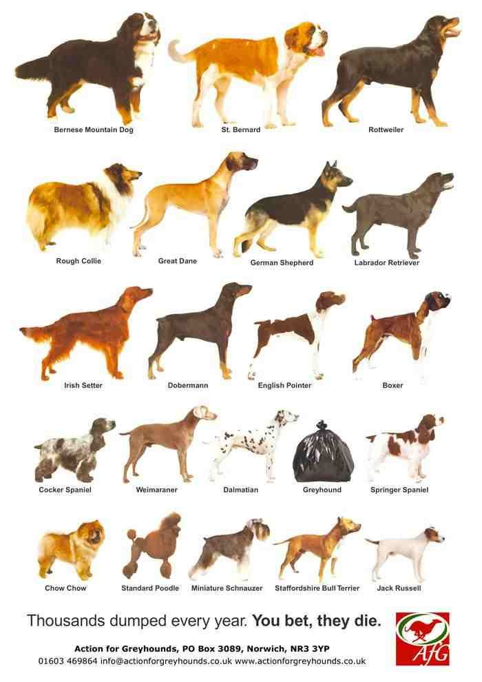 Dog Breeds With Names Google Search