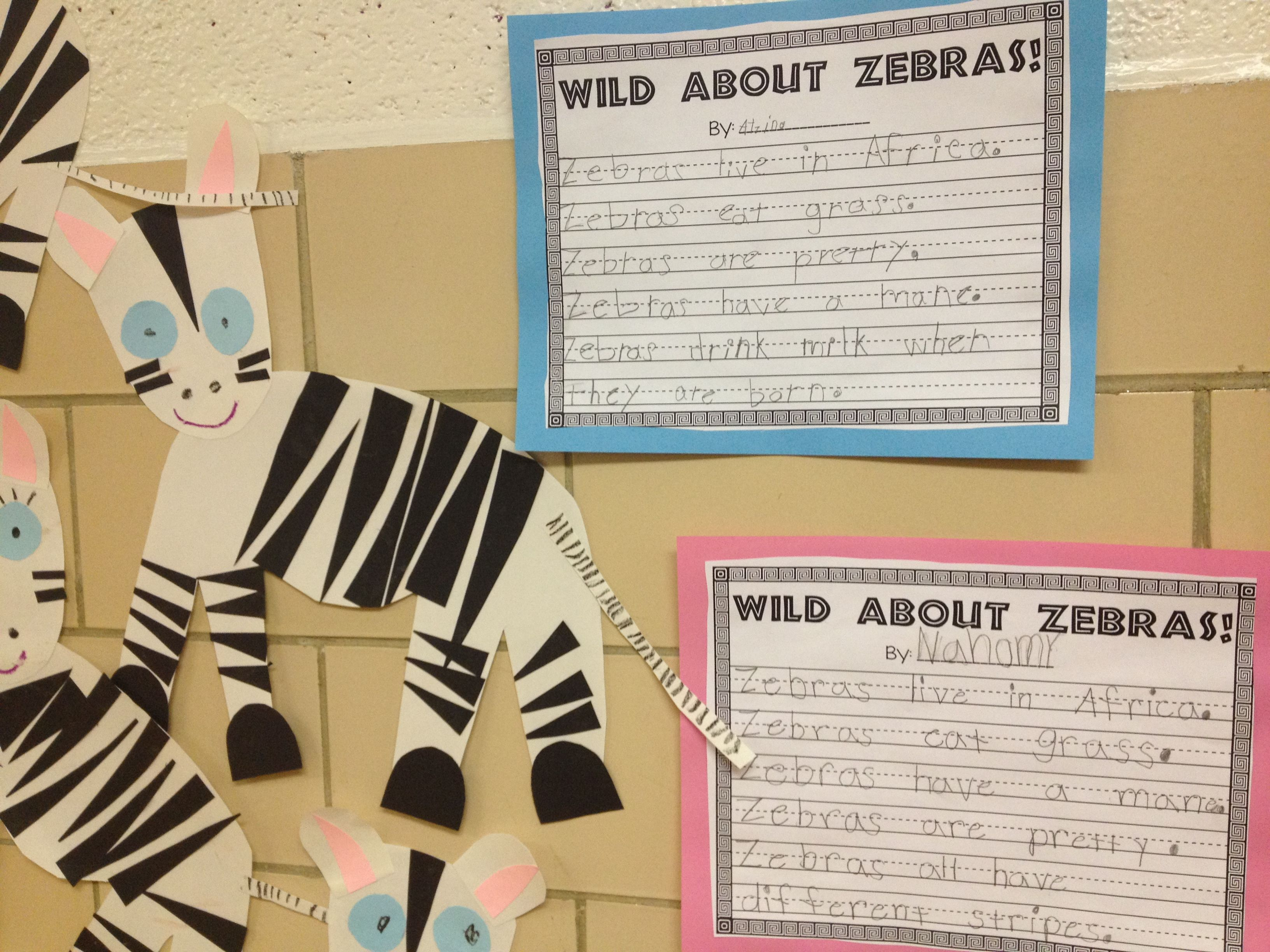 Wild About Zebras