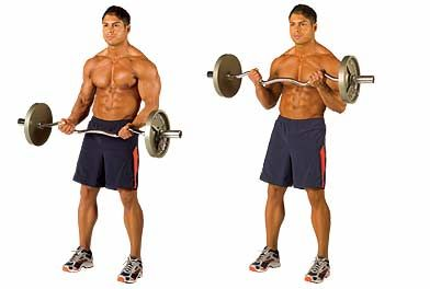 Arm Curls Bicep Exercise Curl T3