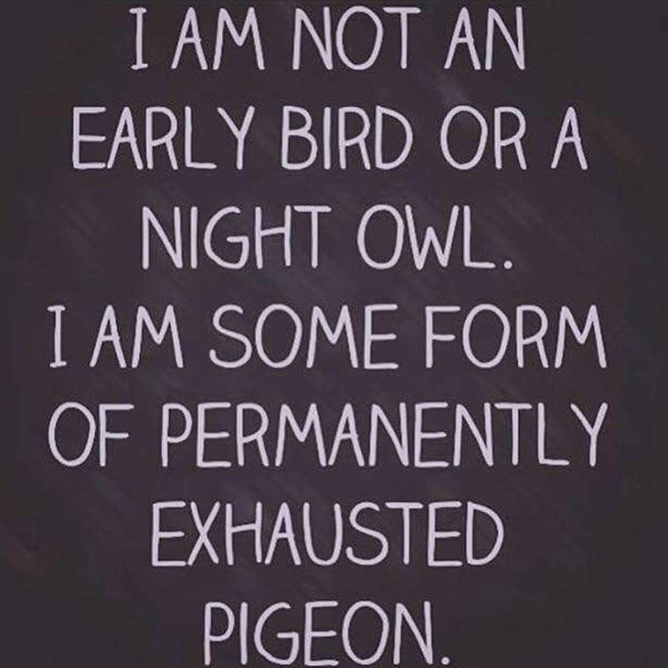 I Am Not An Early Bird Or A Night Owl I Am Some Form Of