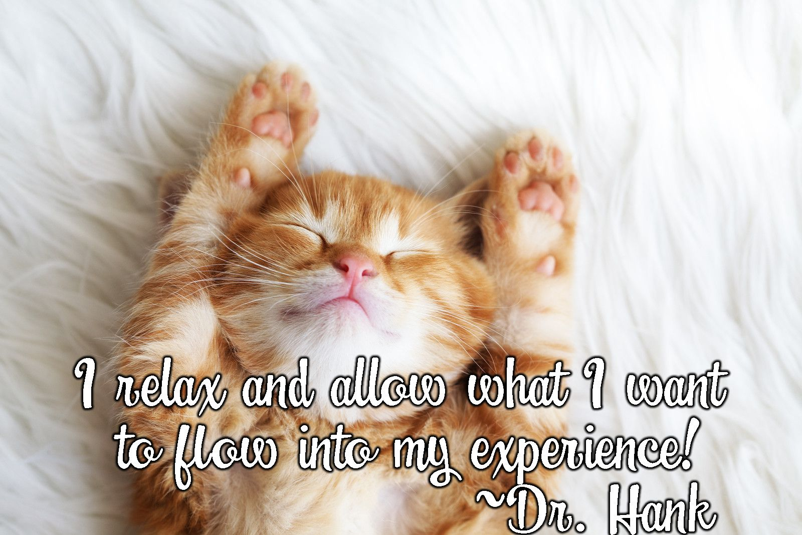 Inspirational Quote By Dr Hank Affirmations Relax Mindfulness Lawofattraction Loa Abrahamhicks Happiness Cats Quo Cute Cats Photos Cat Photo Cute Cat