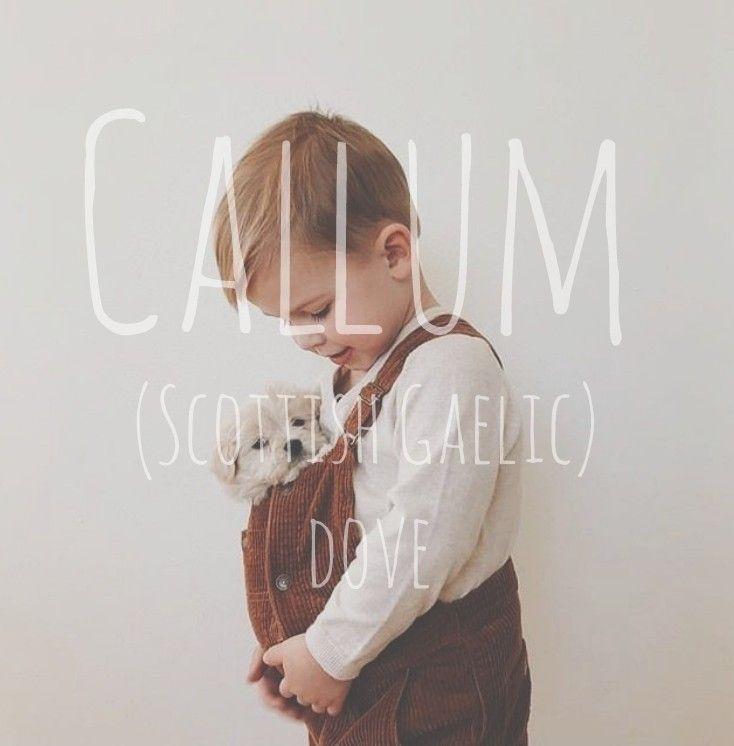 Callum = Taube. Herkunft: Schottisches Gälisch - Babynamen #Babynamen #Babynamen - ... - #Babynamen #Callum #Gälisch #Herkunft #Schottisches #Taube #babynamesboy